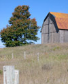 Barn in field with maple tree.